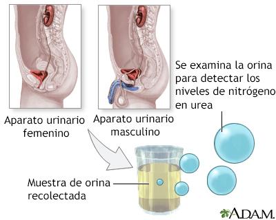 dietas semanales para bajar el acido urico exame de sangue acido urico para que serve el acido urico provoca comezon